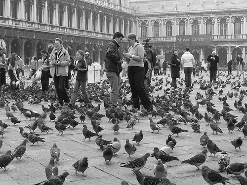 Venice San Marco square historical photo